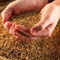 Влагомеры зерна